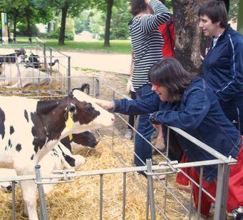 img-quefem-paseo-vaca